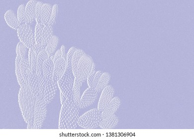 Textures of abstract cactus,succulent for collection