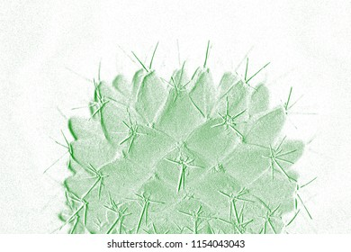 Textures of embossed cactus