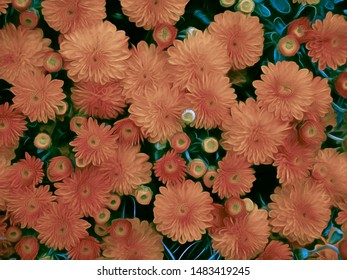 This is a stylized Chrysanthemum pattern for use as a background or standalone.