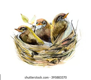 Three chicks. Nest with a baby birds. Family. Watercolor hand drawn illustration.