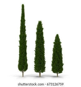 three cypress trees on white. 3D illustration