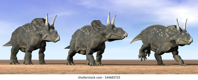 Three diceratops dinosaurs standing in the desert by daylight