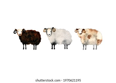 three funny sheep painted in watercolor