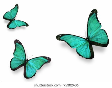 """Three green butterflies """"morpho"""", isolated on white background"""