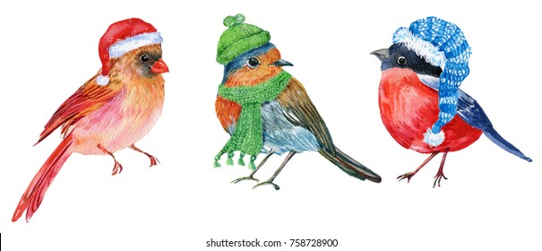 Three little birds in Christmas hats,Robin,red cardinal,bullfinch.Watercolour illustration