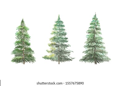 Three sunny green Christmas fir trees watercolour set hand drawn botanical illustration copy space isolated on white background