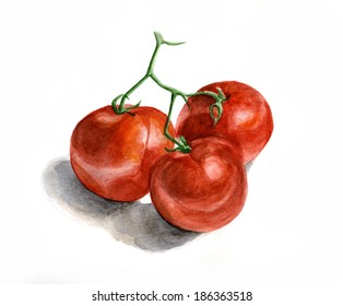 Three tomatoes on a branch. Watercolor painting on white background