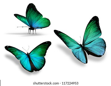 Three turquoise butterfly, isolated on white background
