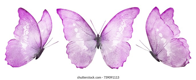 Three violet butterflies butterfly, isolated on white background