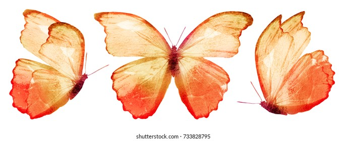 Three watercolor Orange butterfly, isolated on white background