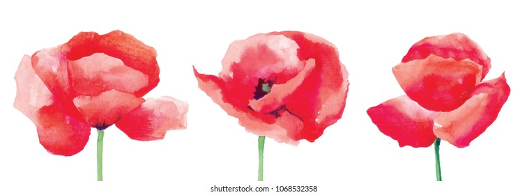 Three watercolor red poppies.