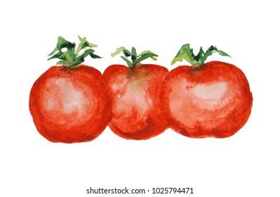 three watercolor tomatoes
