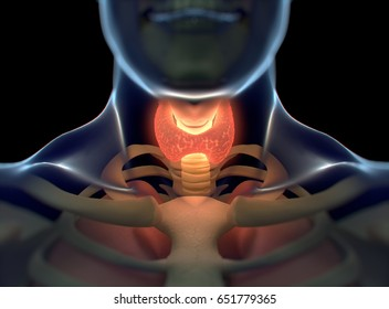 Thyroid gland inside human body. Glowing red. 3D illustration.