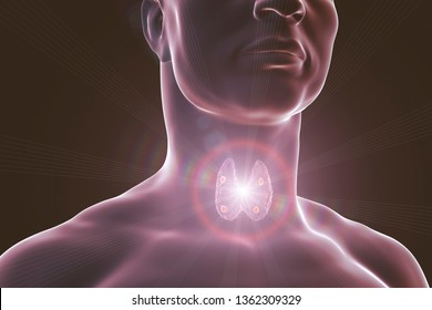 Thyroid and parathyroid glands in human body, 3D illustration