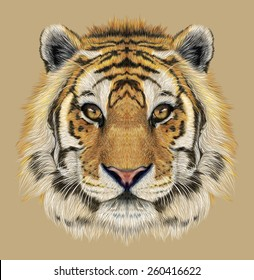 Tiger animal face. Illustrated Bengal head portrait. Realistic fur beast of tiger. Predator eyes of wildcat. Big cat head on beige background.