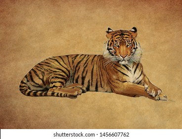 TIGER COLOUR PENCIL DRAWING ON BROWN BACKGROUND