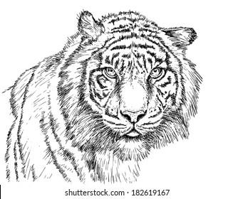 Tiger digital drawing