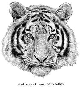 Tiger head hand draw monochrome on white background illustration.