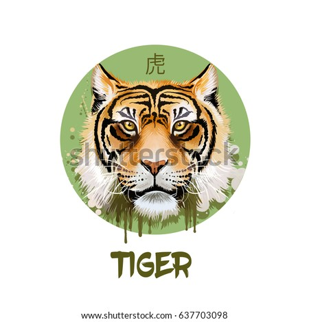 Tiger horoscope character isolated on white background. Symbol Of New Year 2022. Chinese calendar animal in circle with hieroglyphic sign, digital art realistic illustration, greeting card design