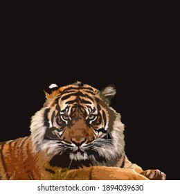a tiger on the black color background