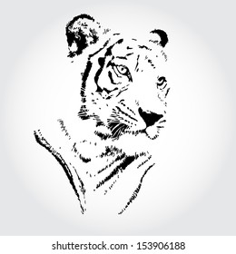 Tiger sketch isolated background.