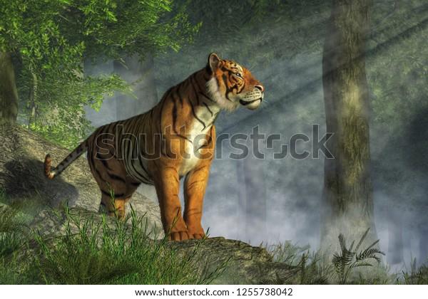 Tiger Stands On Boulders Jungle Sunlight Stock Illustration 1255738042