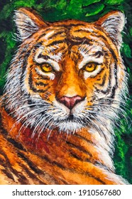 Tiger. Wild tabby cat. Close up face portrait.  Watercolor painting. Acrylic drawing art.