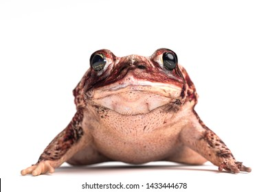 toad isolated on white background 3d illustration