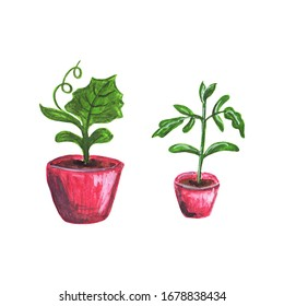 Tomato and cucumber sprouts in seedling pots. Two bright red seedling pots with green young sprouts. Hand drawn colorful gardening illustration.