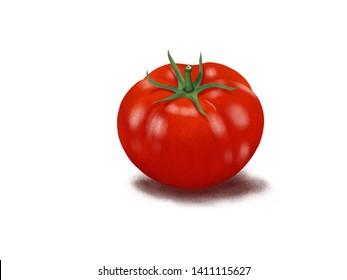 Tomato on a white background. cartoon, digital paint.