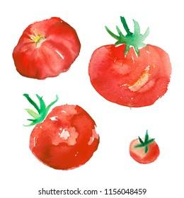 Tomato watercolor artistic illustration for design organic food, label design of paste, restaurant business.