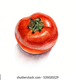 Tomato. Watercolor on white background, isolated