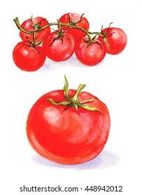 tomato watercolor vegetable .small red cherry tomatoes. illustration watercolor