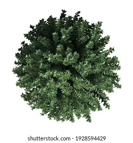 Top plan view of vegetation tree | 3D Illustration