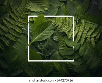 top view of creative layout made out of wild forest leaves with paper card note. Flat lay foliage. Nature concept