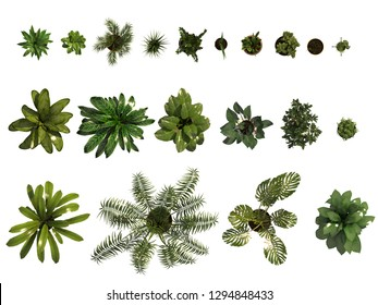 Top View of different plants on white background