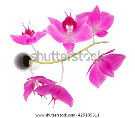 Top View Orchid Flowers Vase Isolated Stock Illustration 425105311 Flower Vase Top View on umbrella top view, desk top view, tree top view, couch top view, table top view, plate top view, sculpture top view, rug top view, bedroom top view, spoon top view, apple top view, box top view, plant top view, rose top view, stool top view,