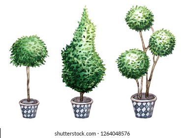 Topiary tree plants set of garden and park decor nature floral isolated watercolors elements on white background