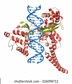 Topoisomerase I (topo I) DNA binding enzyme. Target of a number of chemotherapy drugs used against cancer. Cartoon representation. DNA in blue. Protein: secondary structure coloring.