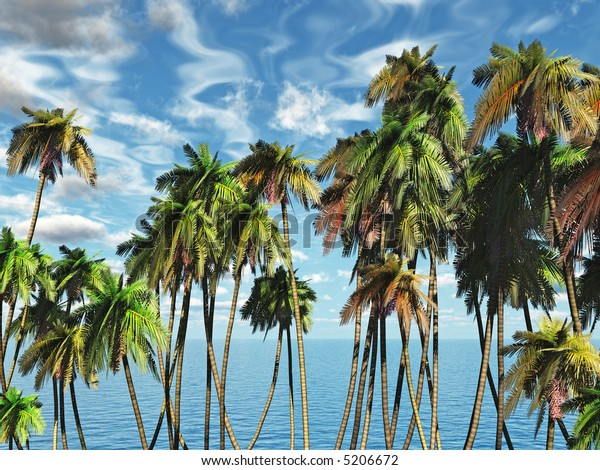 Tops of palm trees on a background of a blue sky