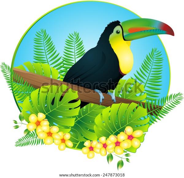 toucan-600w-247873018.jpg