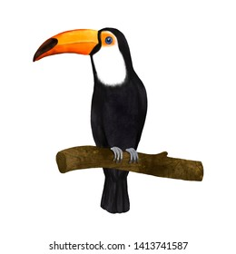 Toucan bird animal realistic illustration