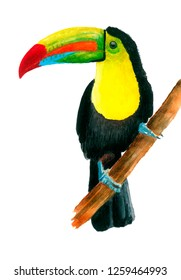 Toucan Keel-billed toucan hand drawn in watercolors isolated on a white background Ramphastos sulfuratus
