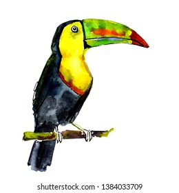 Toucan on branch. Watercolor illustration