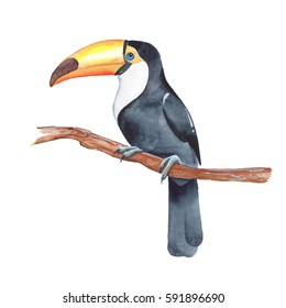 Toucan on branch. Watercolor illustration, isolated on white