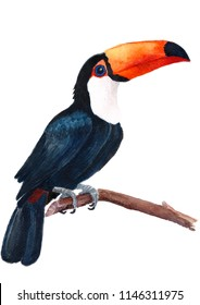 Toucan toco black drawn in watercolors isolated on a white background Ramphastos toco, handwork