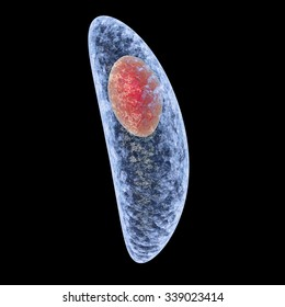 Toxoplasma gondii isolated on black background. Protozoan which is transmitted from cats and other animals and causes toxoplasmosis especially dangerous for pregnant women