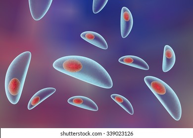 Toxoplasma gondii on colorful background. Protozoan which is transmitted from cats and other animals and causes toxoplasmosis especially dangerous for pregnant women