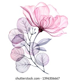 Transparent floral set isolated arrangement of big pink roses, buds, leaves, branches in pastel grey, violet, purple, vintage ornament, wedding design, stationery card print
