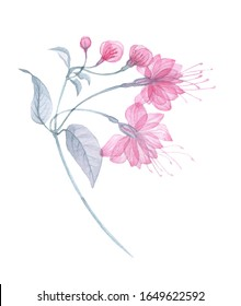 Transparent flowers of soft pink color drawn by hand in watercolor, isolated on a white background, drawing x-ray of flowers Delicate spring petals, pistils, stamens Botanical drawing flower structure